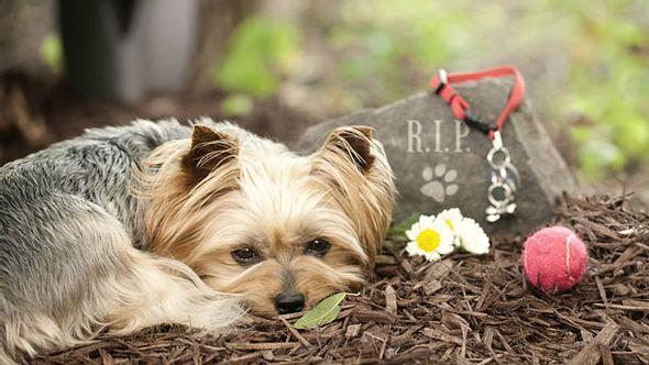 Haustier verstorben - Wie soll ich mit der Trauer umgehen? - Foto: Liliboas / iStock