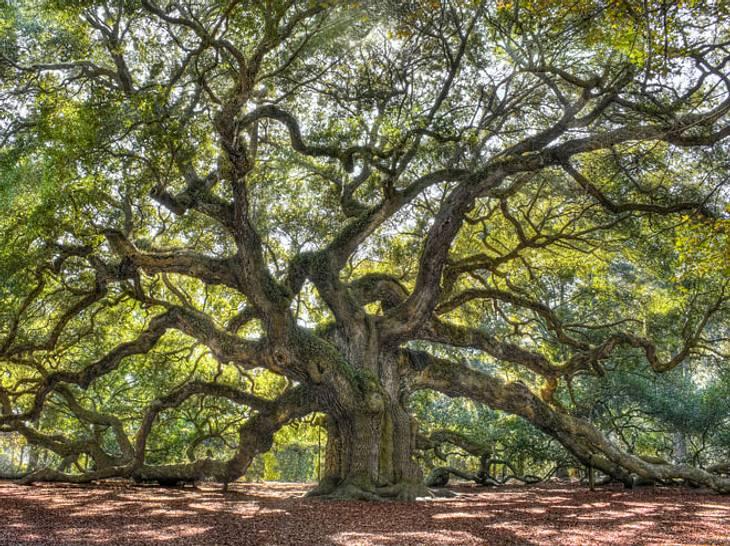 So nutzen Sie die Heilkraft von Bäumen