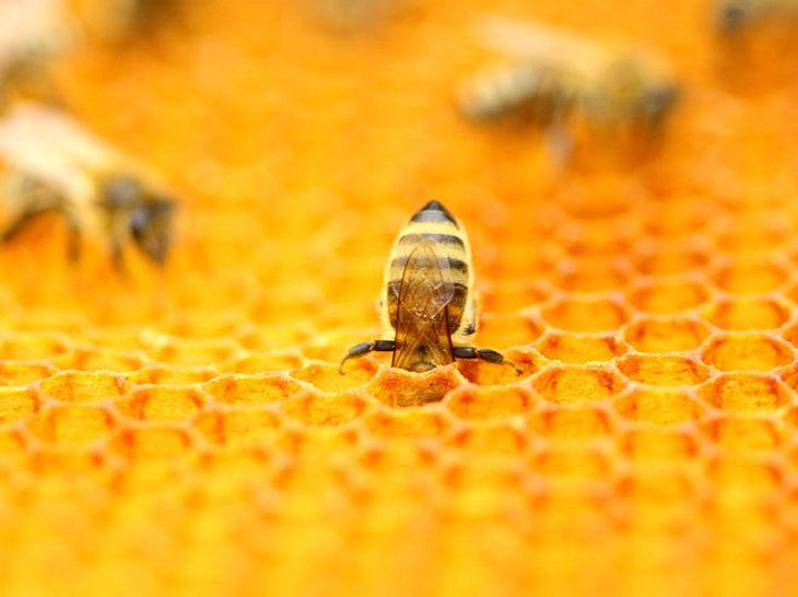 Propolis, Gelée royale und Co.: Die Heilkraft der Bienen
