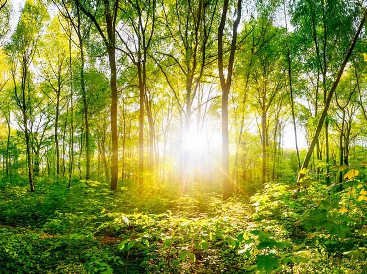 Heilpflanze Baum: Beschwerdefrei mit der Kraft der Bäume