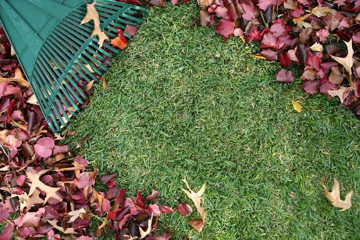 Herbst-Laub: Was ist erlaub - was ist verboten?