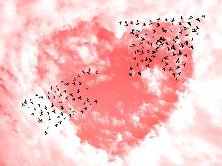 Herz und Seele wichtig für Operation