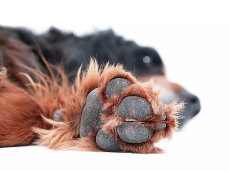Pfotenwachs Selber Machen Das Hilft Rissigen Hundepfoten