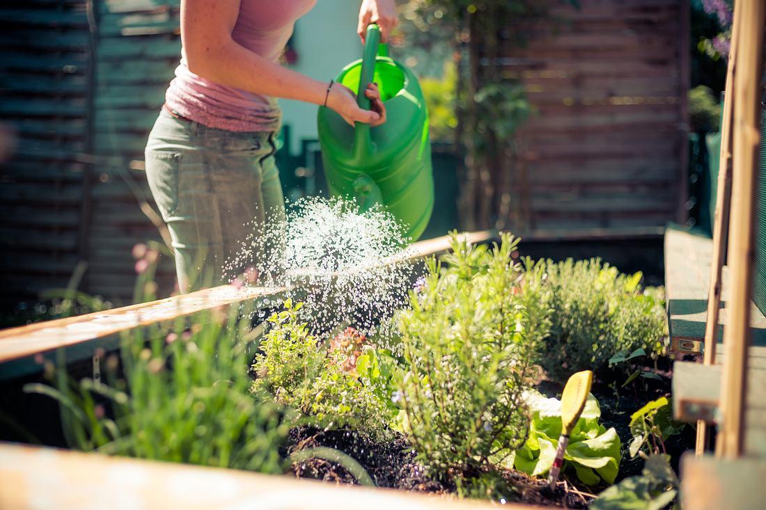 Frau gießt Pflanzen in einem angelegten Hochbeet.