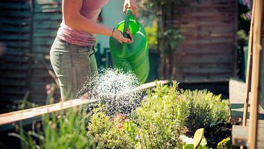 Frau gießt Pflanzen in einem angelegten Hochbeet. - Foto: iStock/Patrick Daxenbichler
