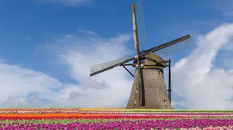 Urlaubstipp: Zur Tulpenblüte nach Holland - Foto: Prasit Rodphan / iStock