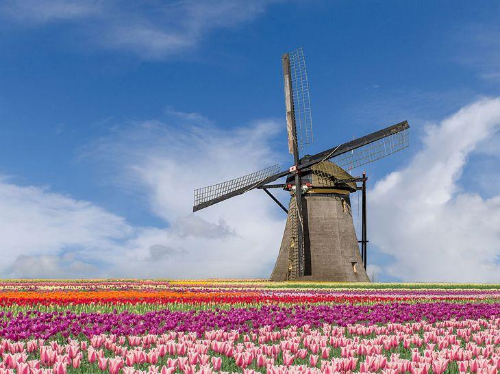 Urlaubstipp: Zur Tulpenblüte nach Holland