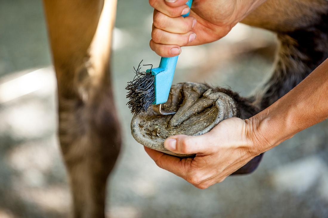 Person führt Hufpflege am Pferd aus