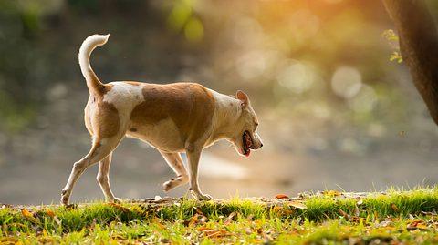 Welche Symptome auf Arthrose beim Hund hindeuten können. - Foto: momnoi / iStock