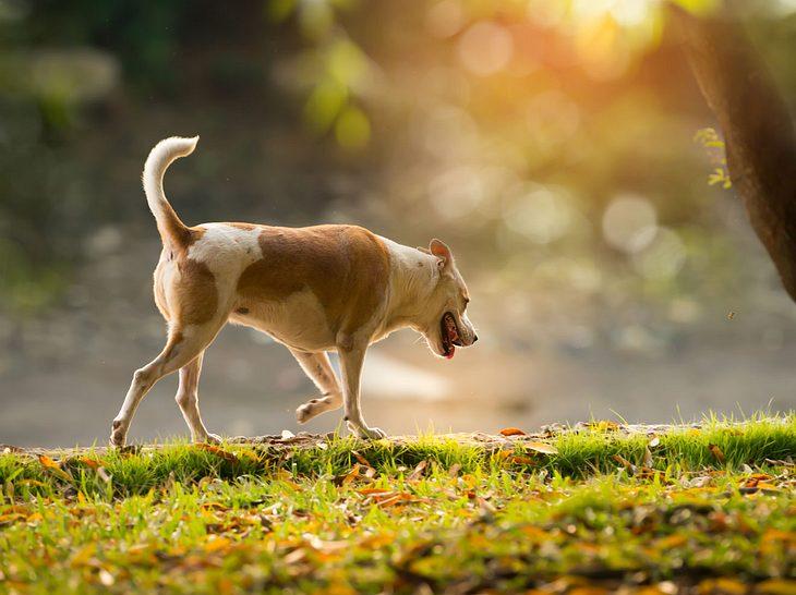 Welche Symptome auf Arthrose beim Hund hindeuten können.