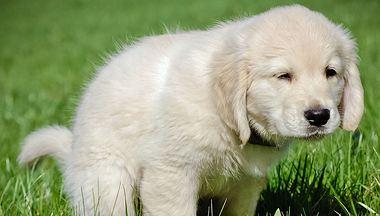 Hund Durchfall - Foto: Logorilla / iStock
