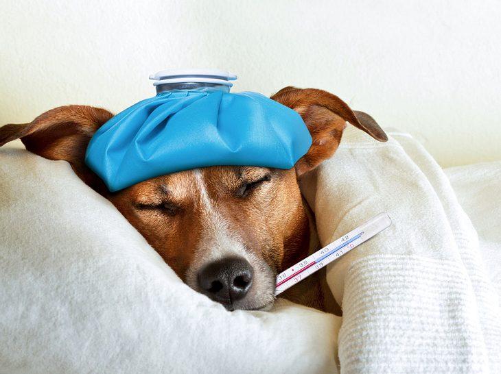 Auch Hunde können eine Erkältung bekommen
