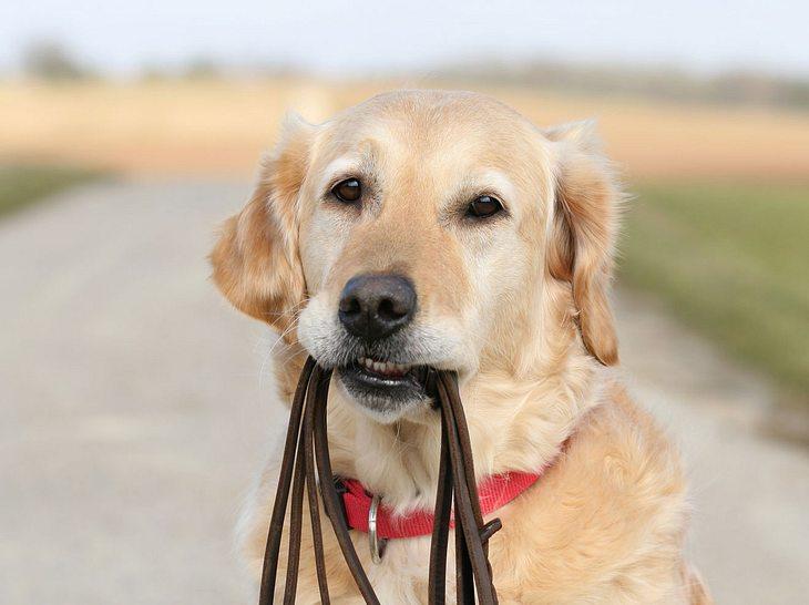 Welche Vorteile ein Hundegeschirr dem Halsband gegenüber hat.
