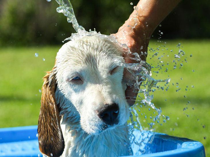 Hund vor Hitze schützen