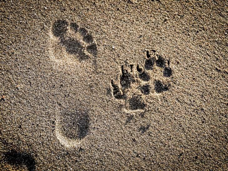 Hund und Mensch Spuren im Sand
