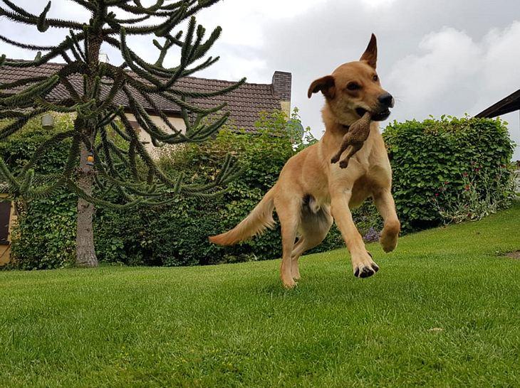 Hund Iroh