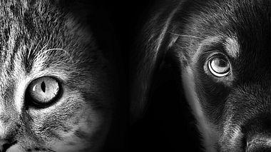 Welches Tier wirklich zu Ihnen passt