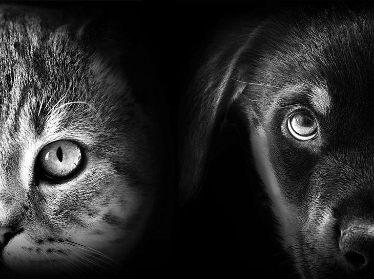 Mögen Sie lieber Katzen oder Hunde?