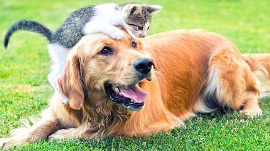Bachblüten für Hunde und Katzen - Foto: bluecinema / iStock