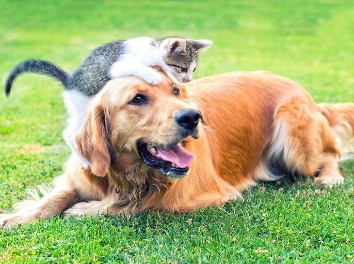 Bachblüten für Hunde und Katzen