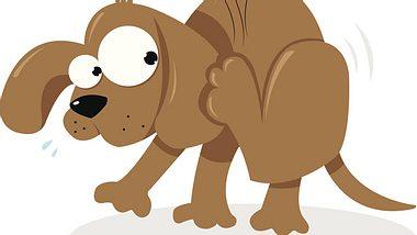 Hilfe! Mein Hund kratzt sich ständig - Foto: Pcanzo / iStock