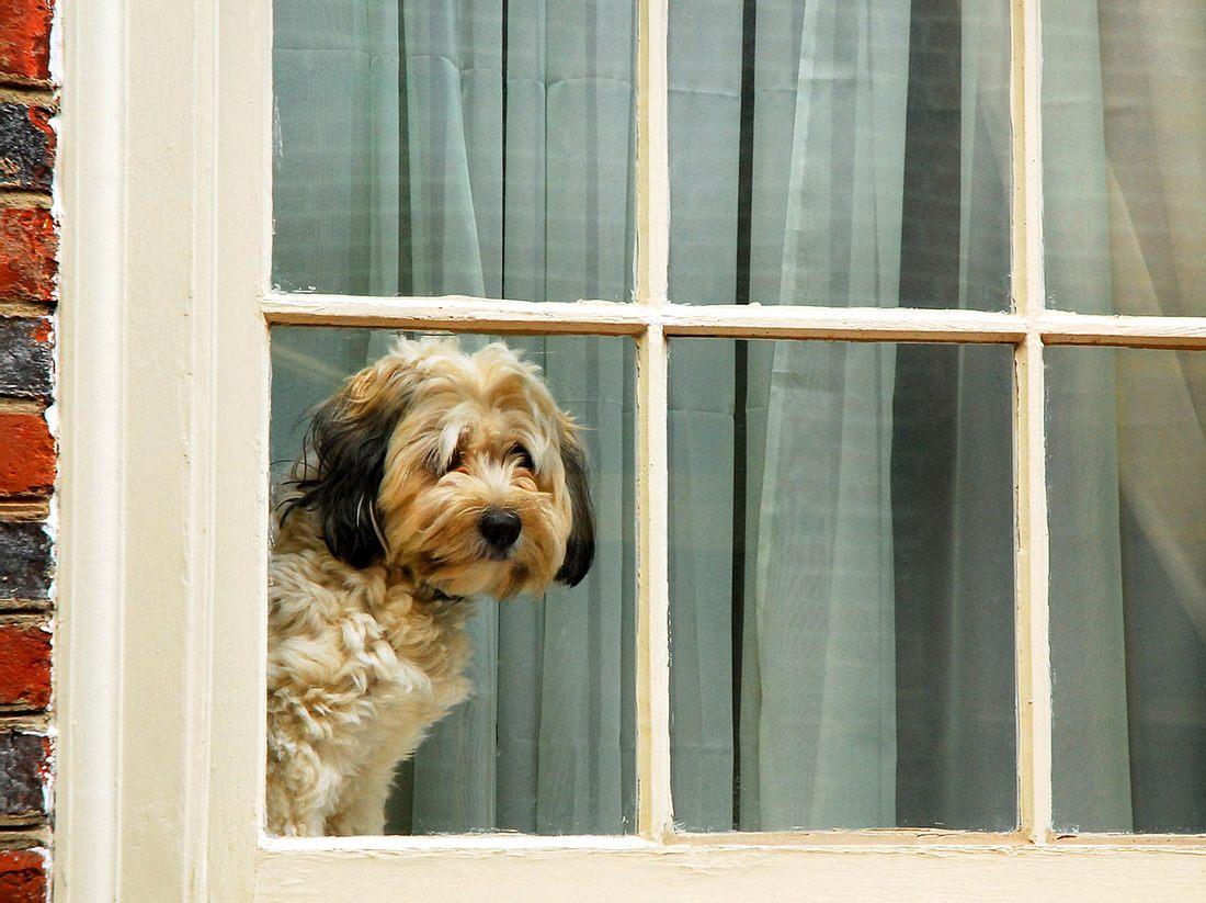 Ob der verliebte Hund eines Tages mit seiner Herzensdame vereint sein wird? (Symbolbild)