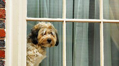 Hund schwärmt für Katze von nebenan