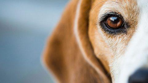Diabetes bei Hunden