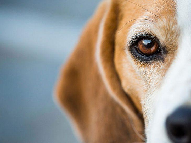 Diabetes bei Hunden ist keine Seltenheit