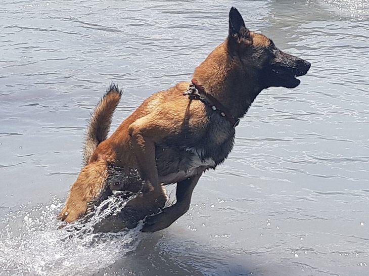 Hund Nash
