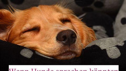 Die Traurigkeit verstoßener Hunde