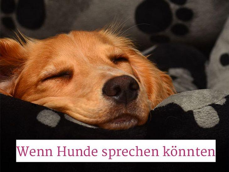 Wenn Hunde im Tierheim sprechen könnten