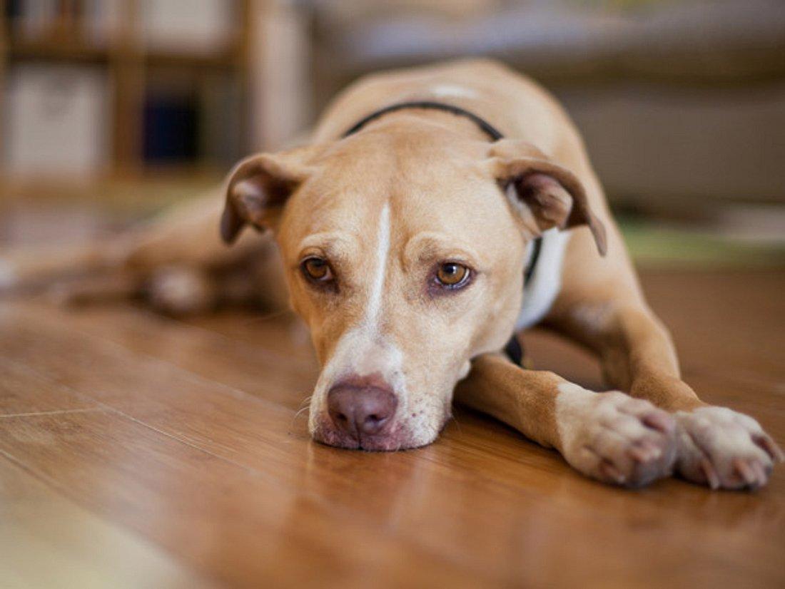 Liebe über den Tod hinaus: Hund trauert bei Beerdigung