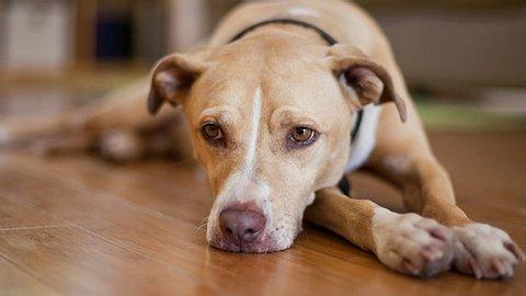 Liebe über den Tod hinaus: Hund trauert bei Beerdigung - Foto: AMR Image / iStock