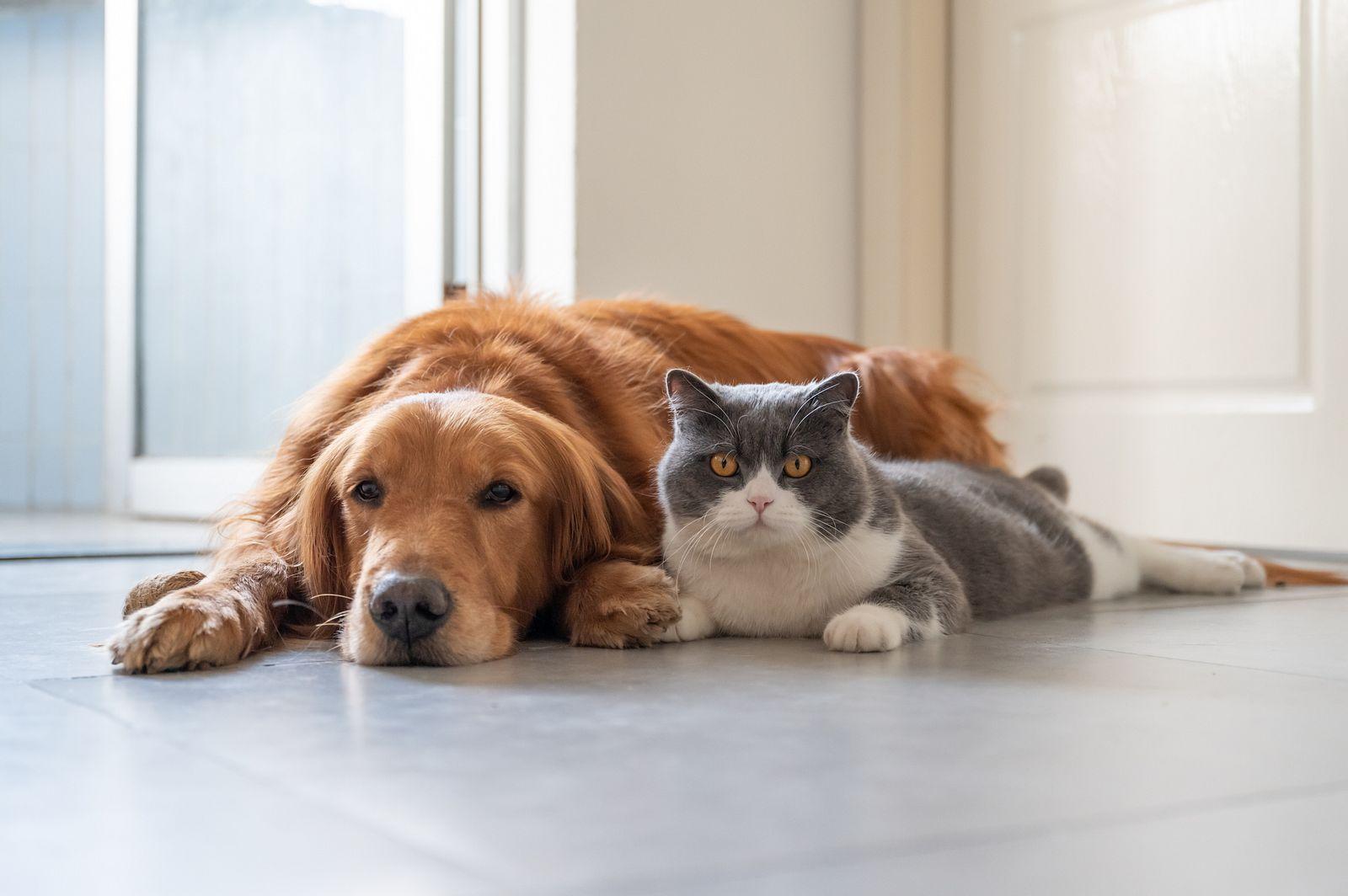 hund und katze aneinander gewöhnen das sollten sie