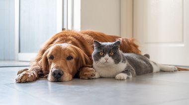 Hund und Katze können mit etwas Geduld sozialisiert werden. - Foto: chendongshan / iStock