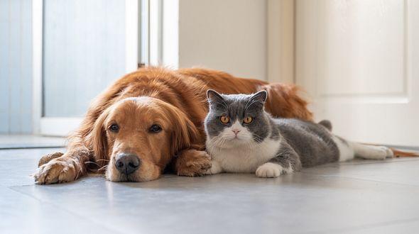 Hund und Katze aneinander gewöhnen: Das sollten Sie beachten