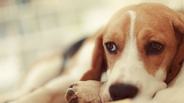 Handykonsum macht Hunde depressiv