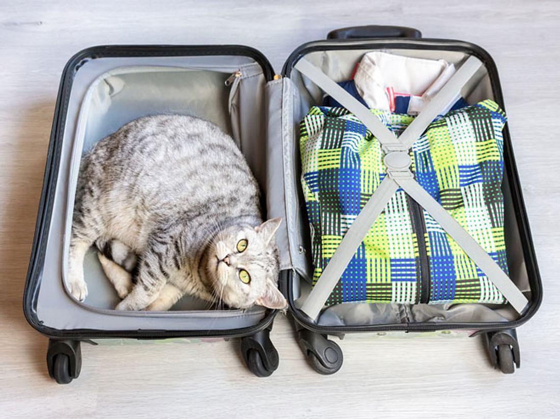 Reisen mit Hund und Katze