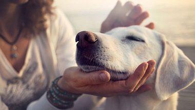 Darum reden wir mit Hunden wie mit Babys - Foto: fcscafeine / iStock