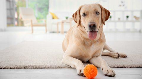Hund mit Intelligenzspielzeug - Foto: iStock/belchonock