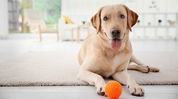 Hunde beschäftigen: Die besten Intelligenzspielzeuge für Haustiere