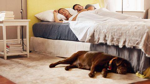 Wenn Sie mögen, können Sie Ihren Hund ruhig im Schlafzimmer nächtigen lassen. - Foto: jacoblund / iStock
