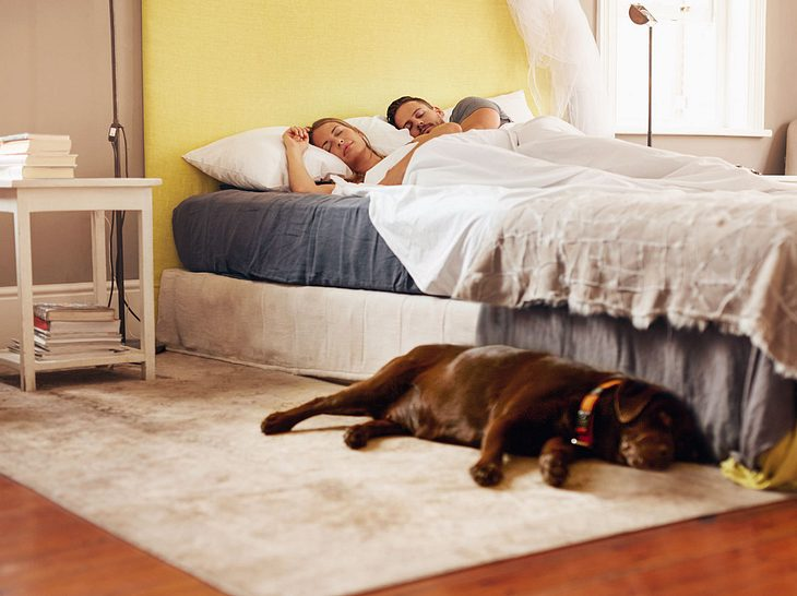 Wenn Sie mögen, können Sie Ihren Hund ruhig im Schlafzimmer nächtigen lassen.