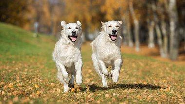 Barbra Streisand hat ihren Hund klonen lassen - Foto: Alona Rjabceva / iStock