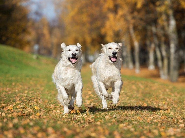 hund klonen