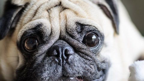 Hunde erkennen, ob wir gute Menschen sind - Foto: Primeimages / iStock