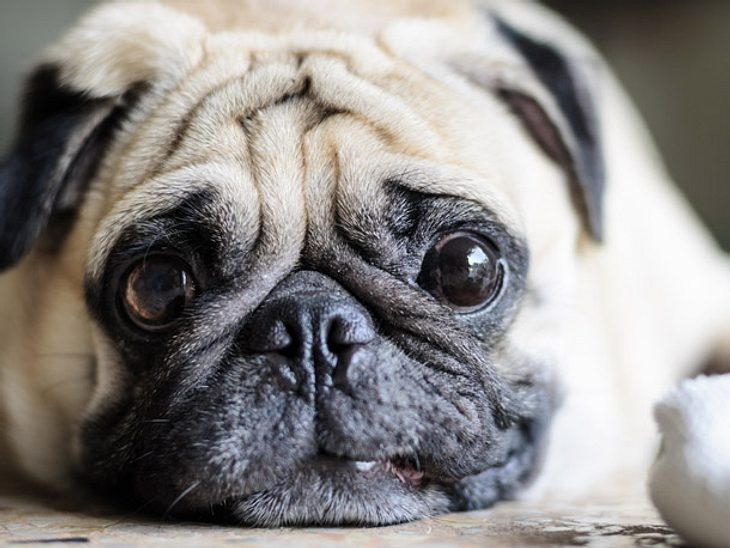 Hunde erkennen, ob wir gute Menschen sind