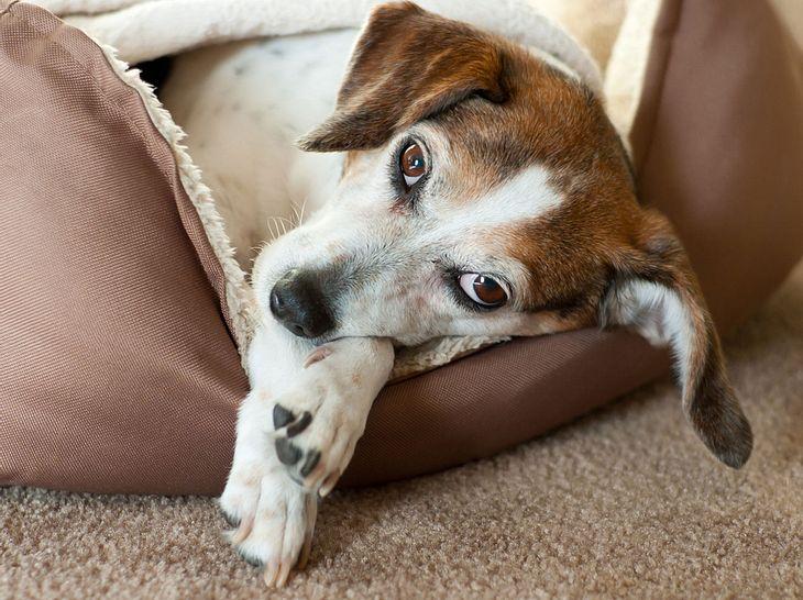 Hundebett selber machen: So nähen Sie ein Hundekissen