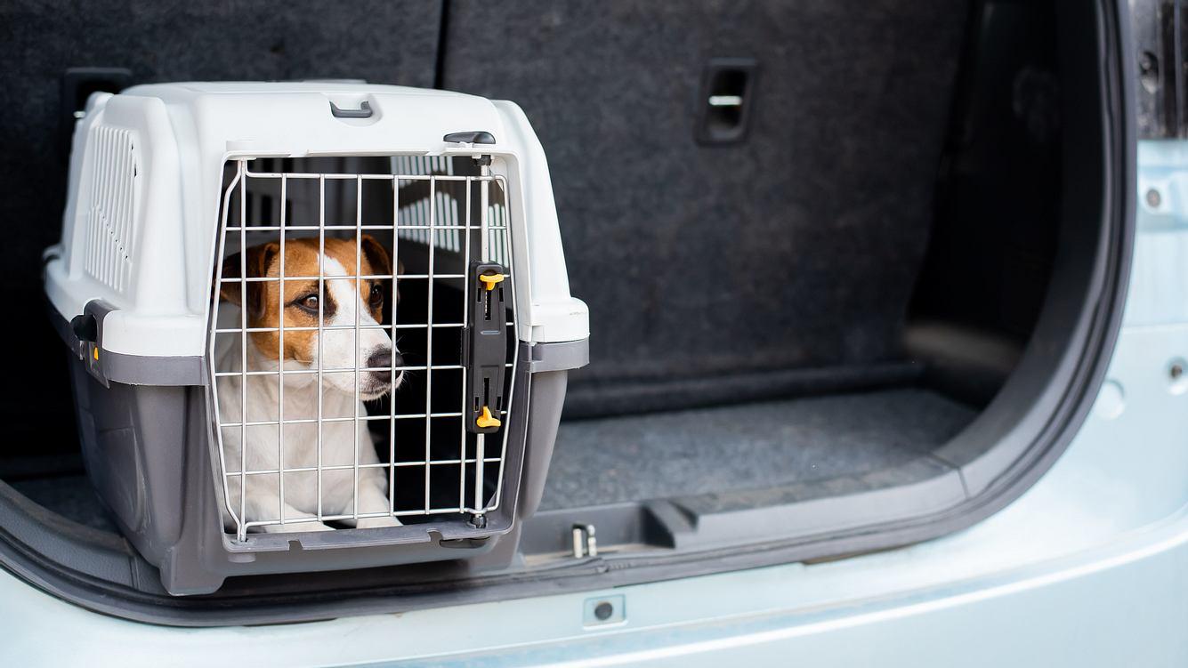 Hund wird in einer Hundebox fürs Auto transportiert.